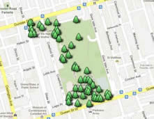 Trinity Bellwoods Tree Tour