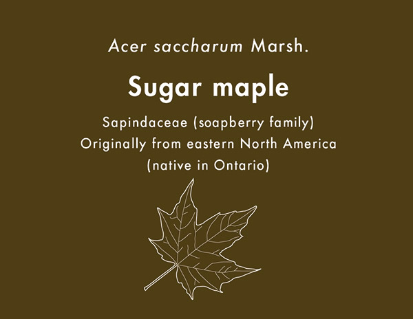 View The Plaque For Sugar Maple